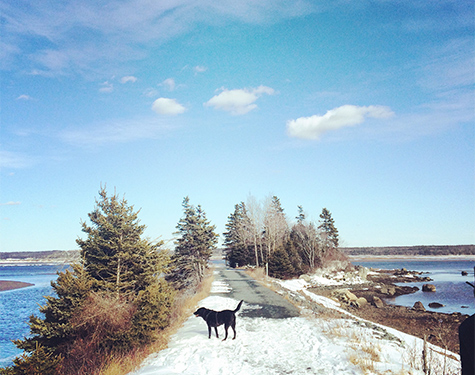 Photo Credit: Halifax Dogventures