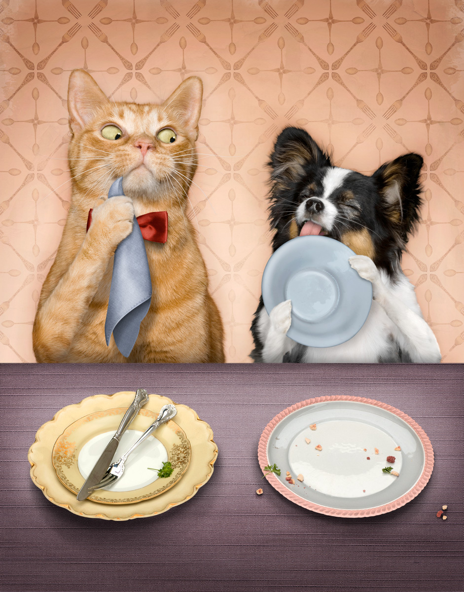 bad-table-manners-5-cat.jpg