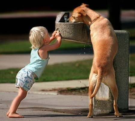 Kindness-dog at fountain.jpg