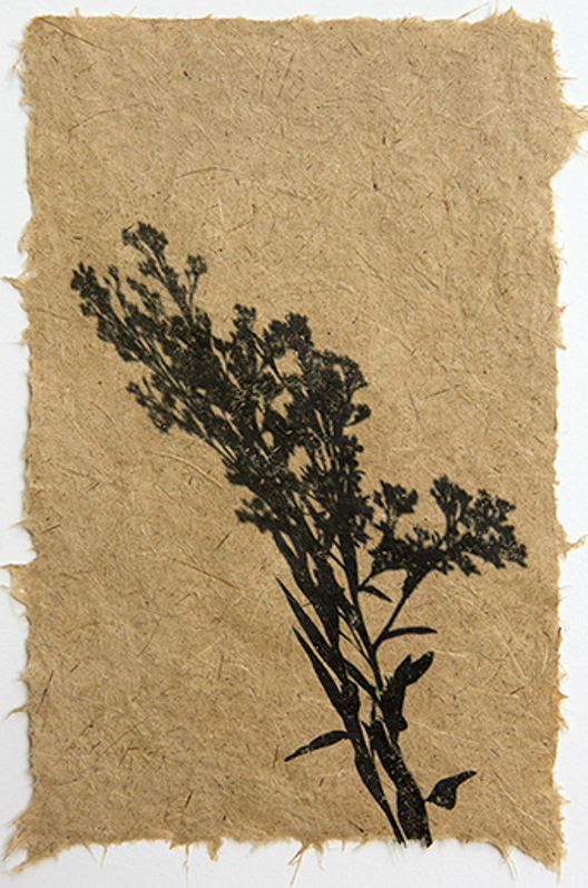 handmade-paper-invasive-species