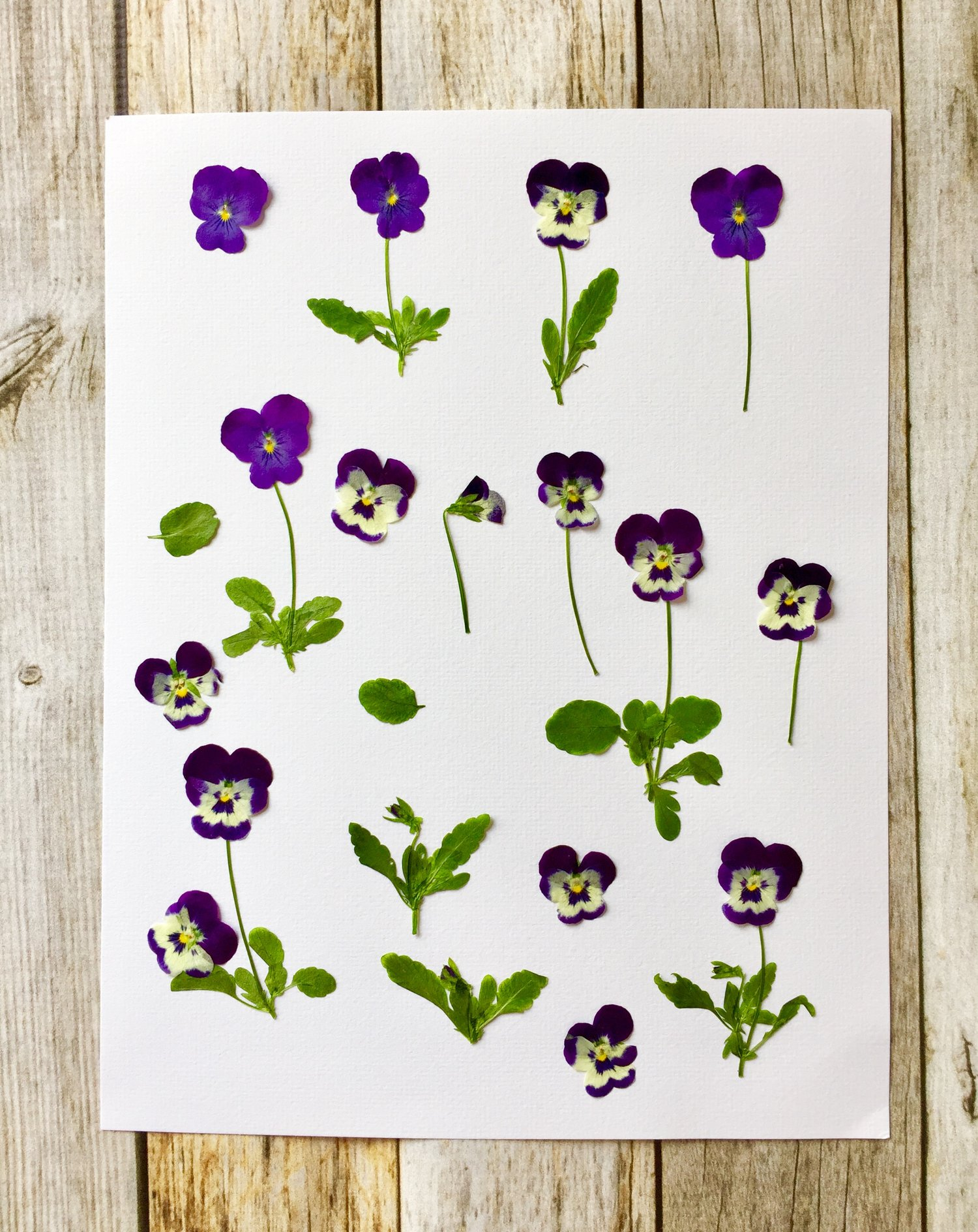 How To Make Pressed Flower Cards Wooden Deckle