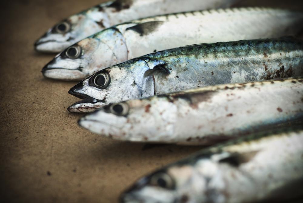 Oily fish (anchovy, herring, mackerel, sardines)