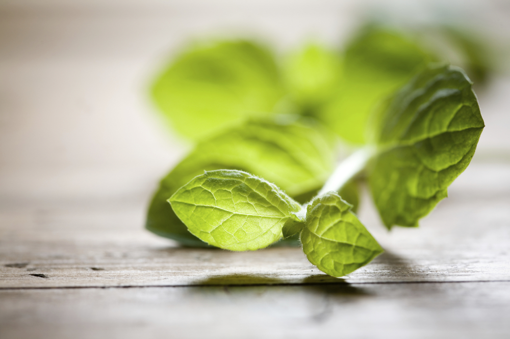 Mint is just one of the many delicious green ingredients that I used in my vegetarian summer rolls.