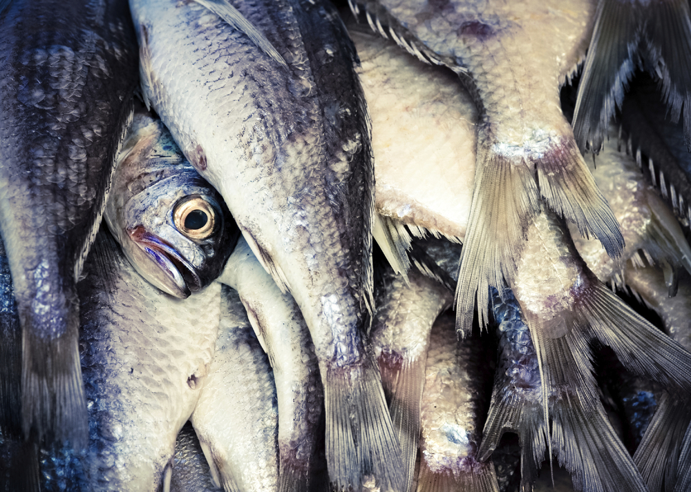 Photo: Kalistratova from a fish market in Quito, Ecuardo