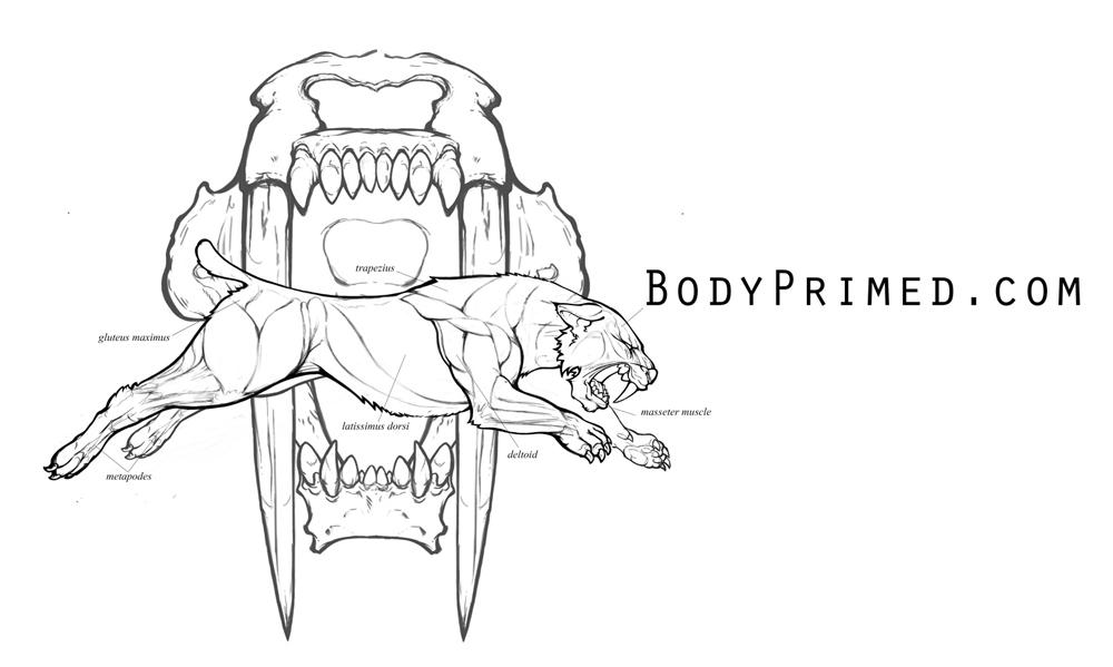 bodyPRIMED-logo-value.jpg