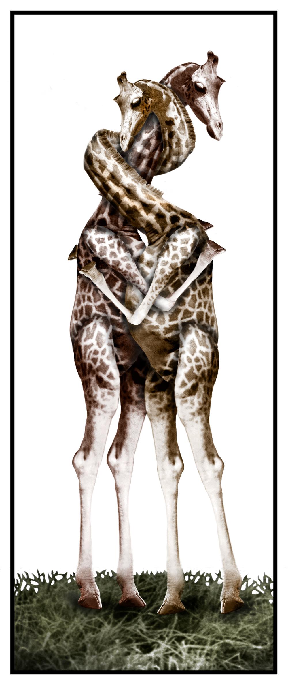 GiraffeHugCard.jpg