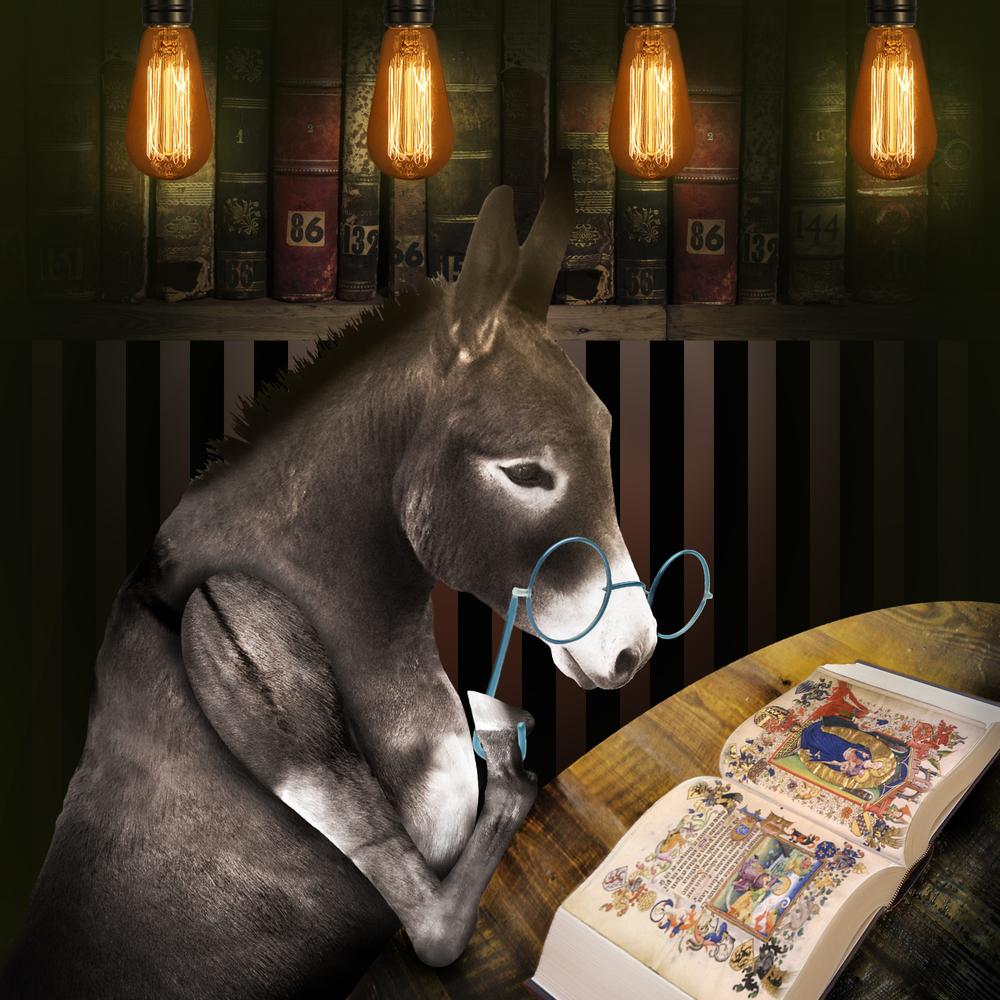 Douglas the Donkey