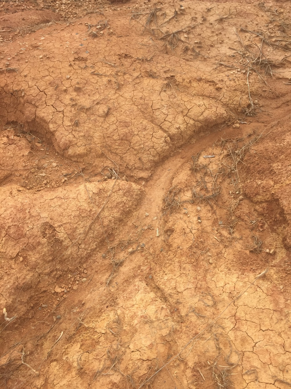 Durham's Triassic Basin Soil
