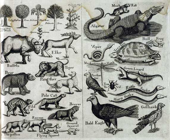 Beasts from John Brickell's Natural History of North Carolina-1737