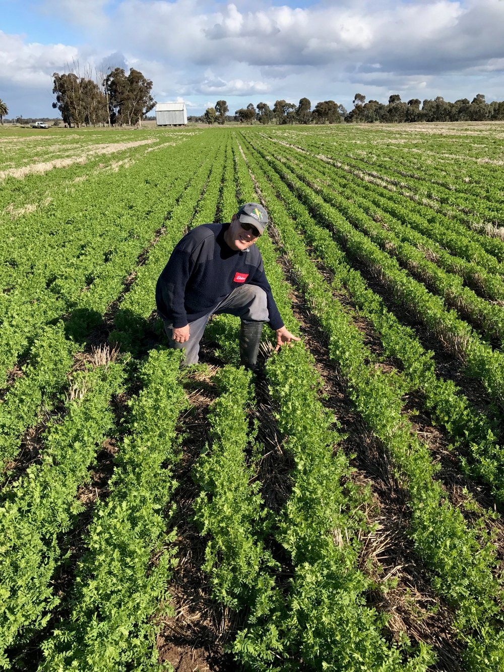 Progressive Wimmera Grower uses CommStream to invest in storage... - In 2017, an innovative cereal and pulse crop grower located in the Wimmera, VIC secured CommStream funding to invest in on-farm storage.By increasing on-farm storage, the grower has become less reliant on local commodity handlers, increased harvest logistics efficiency and enhanced commodity marketing options.In exchange for upfront funding, CommStream is taking physical delivery of Wheat over a 7 year term.