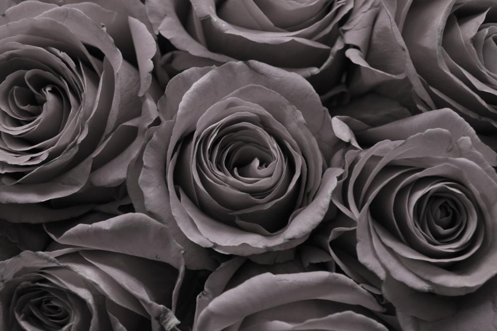 Roses B&W