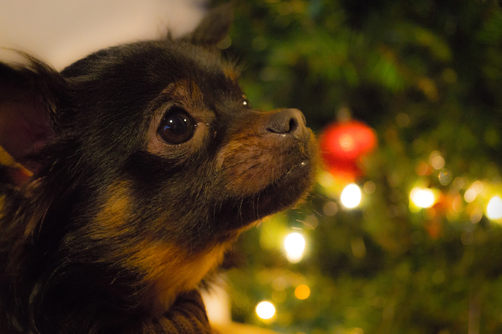 Rocky's Christmas