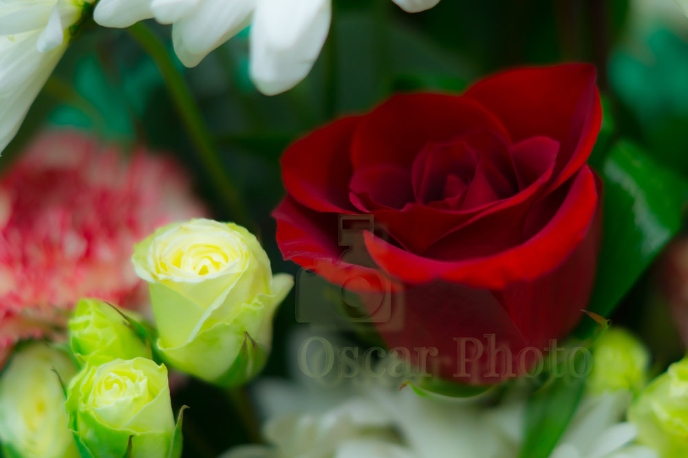Flowers of San Valentine Day 2015
