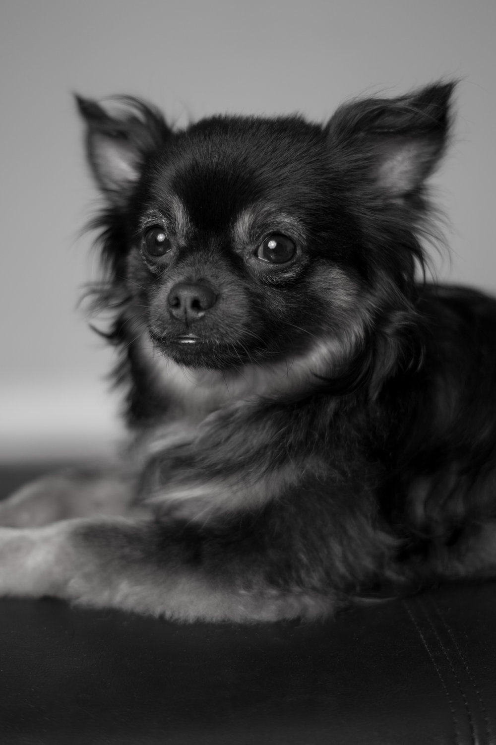 Black and White portrait of Rocky