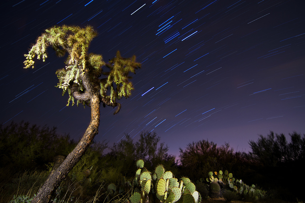 Cholla_and_Star_Trails.jpg
