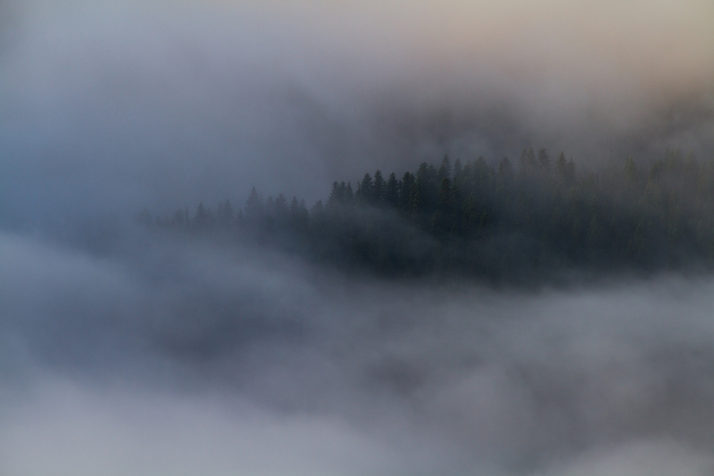 Forest_Ridge_in_Fog.jpg