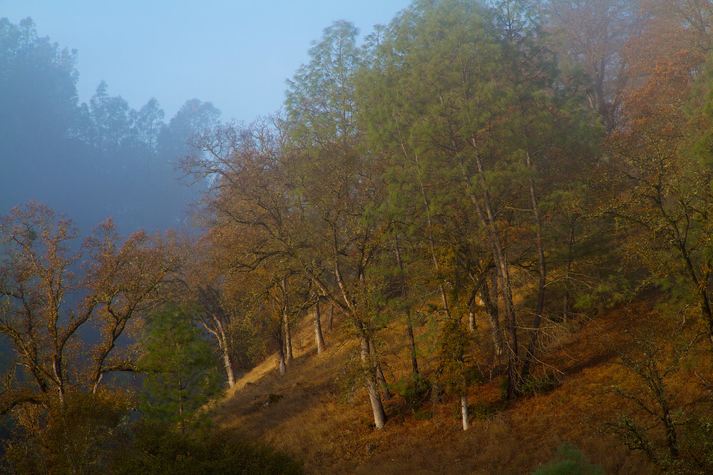 Hillside_in_Fog.jpg