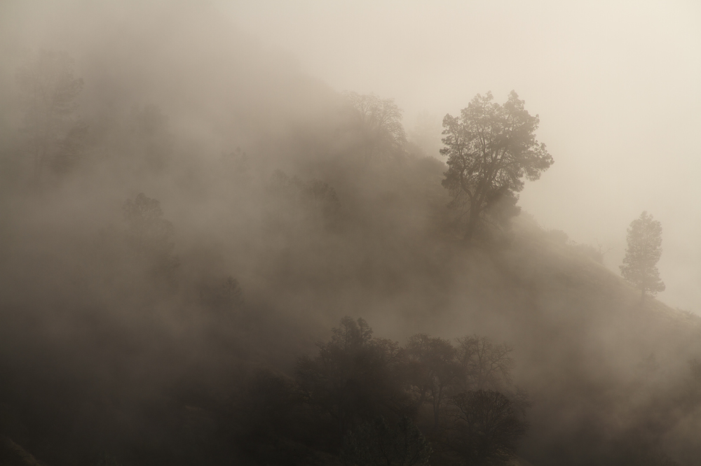 Trees_and_Hillside_in_Fog.jpg