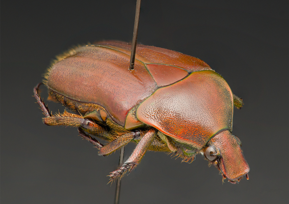 Bug-2.jpg