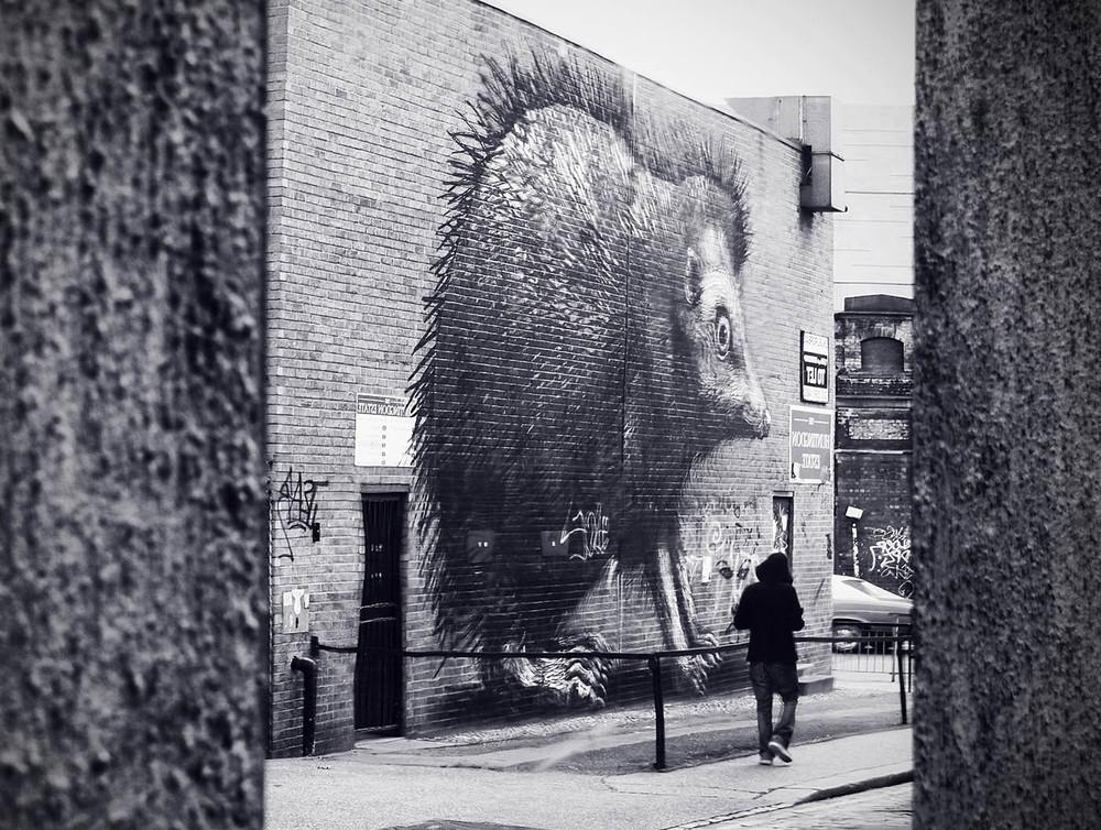 Roa hedgehog