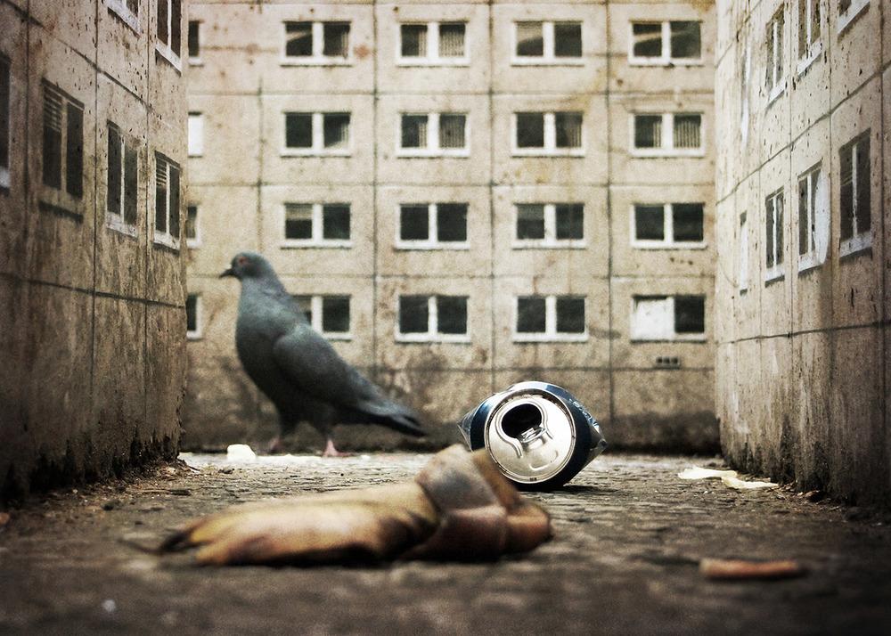 Evol Street Art