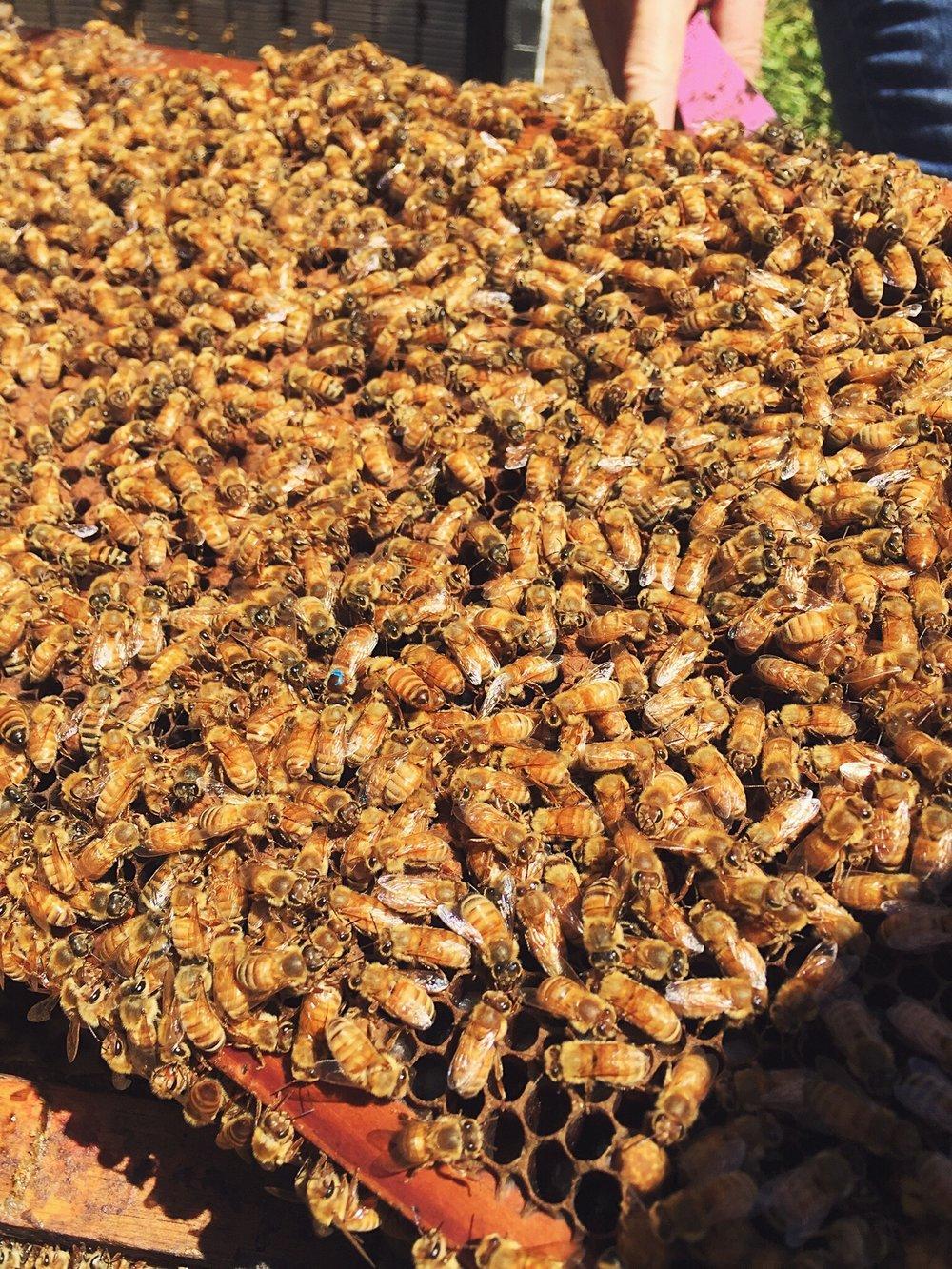 Queen Bee. - <3