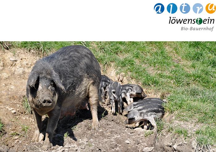 wollschweine.jpg