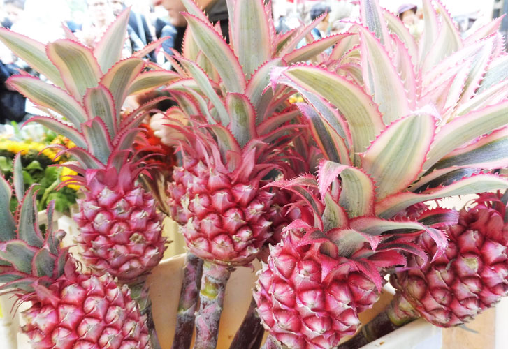 Pink-Pineapples