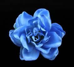 bluegardenia.jpg