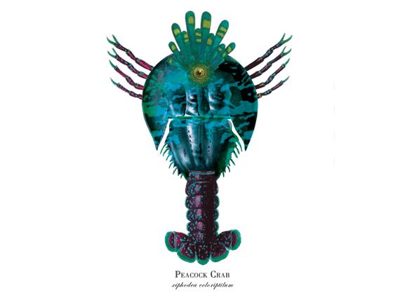 """Peacock Crab"""