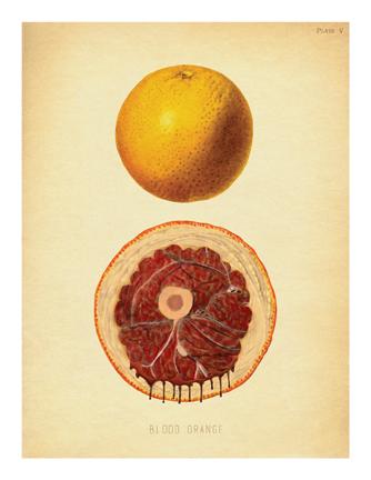 """Blood Orange"""