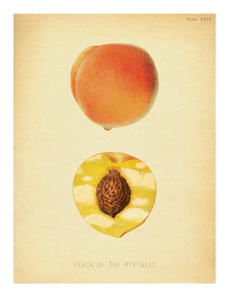 """""""Peach of the Pyrenees"""""""