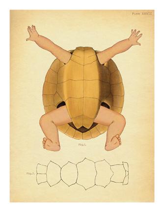 """Turtle Baby"""
