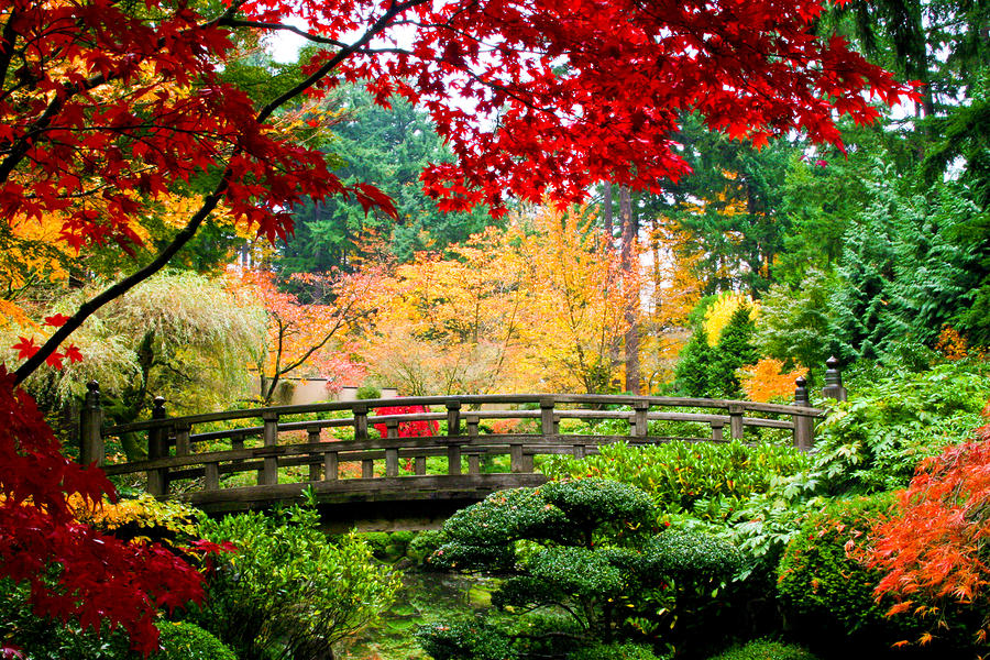 Colorful-Japanese-Garden.jpg