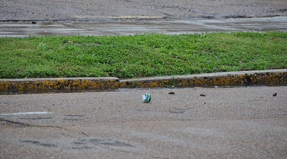 A fallen green carnation drifts past, for veterans of a war we never fought.