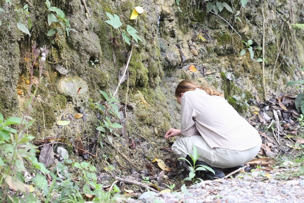 Katie Polythore larval site.JPG