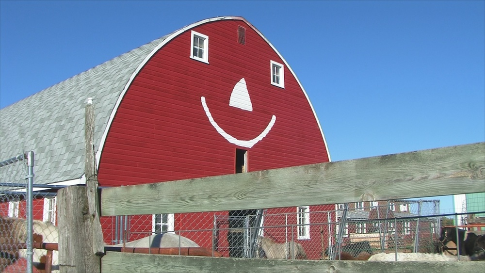 So much fun, even the barn has to smile at Erickson's Petting Zoo!
