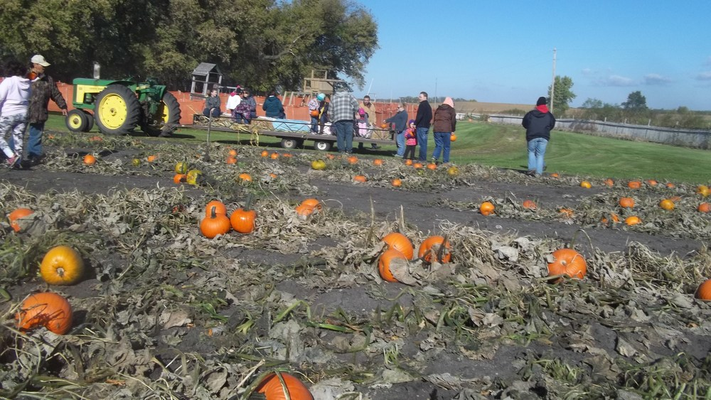 Still is time to call or email  to book your school School field trip for during the day. Other groups can book for evenings or other times. Group rate is $6.00 per student. Each student gets a free pumpkin. If it won't work for this year, make plans for next fall.