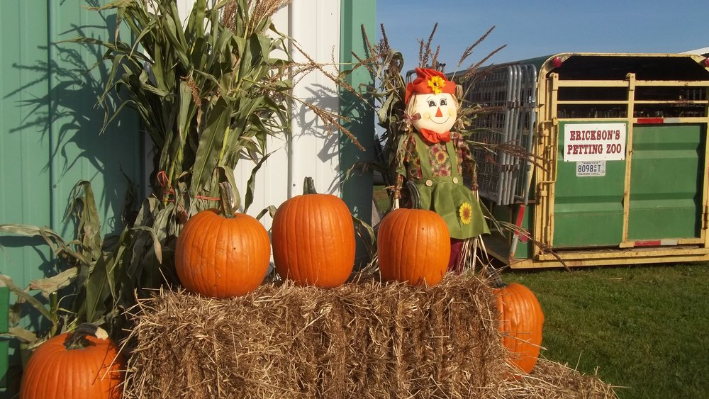 Fall is a great time to come on out to our pick your own pumpkin patch.