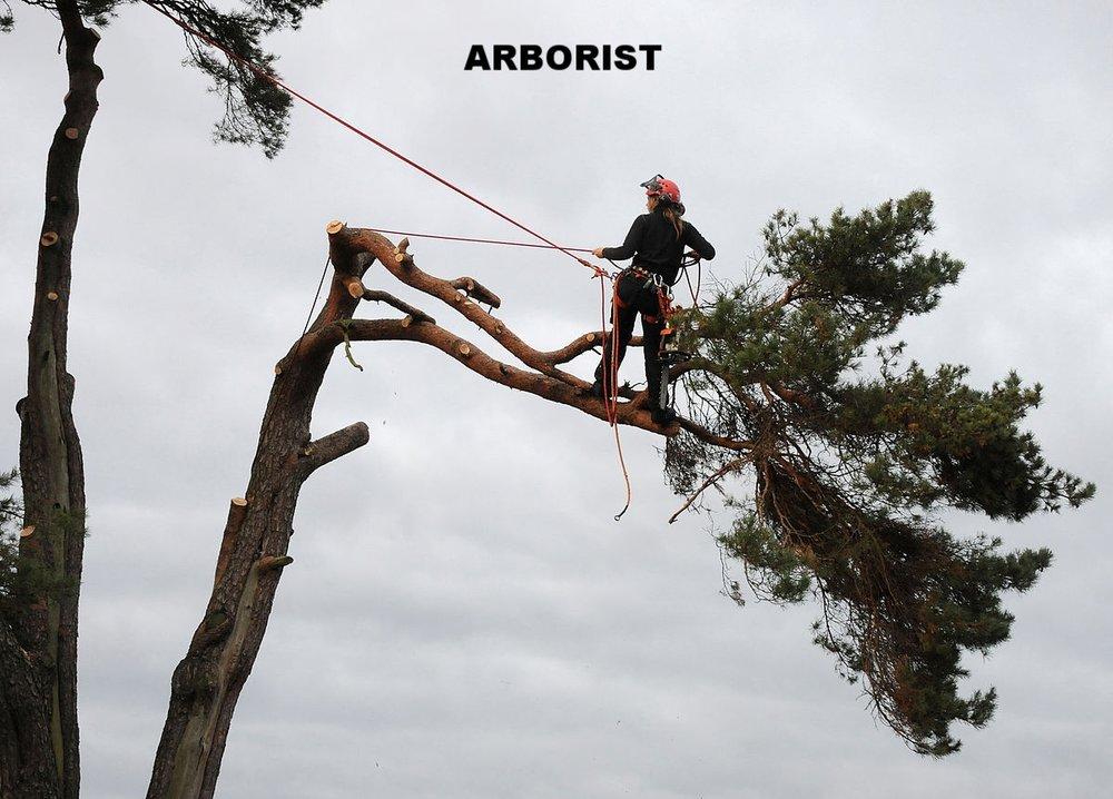 1200px-Arborist4_1024w.jpg