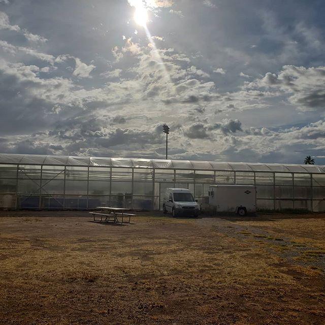 Good Morning Tucson from MG.  #sustainability #tucson #eatlocal #lettuce #salad #azgrown #localeats