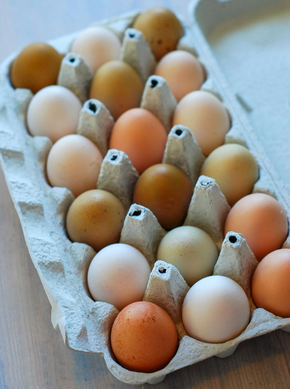 Fargerikt . Egg fra en salig blanding av Pål sine høner.