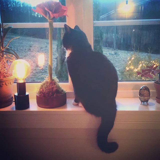 Den fineste julepynten 😻 #lollebassen #katt #julepynt #advent #bortskjemtkatt