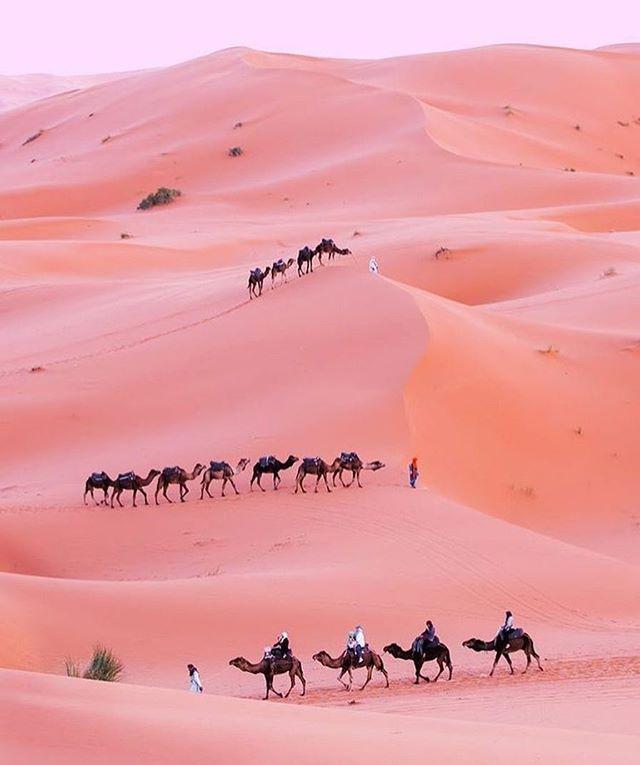 💜 #desertsands