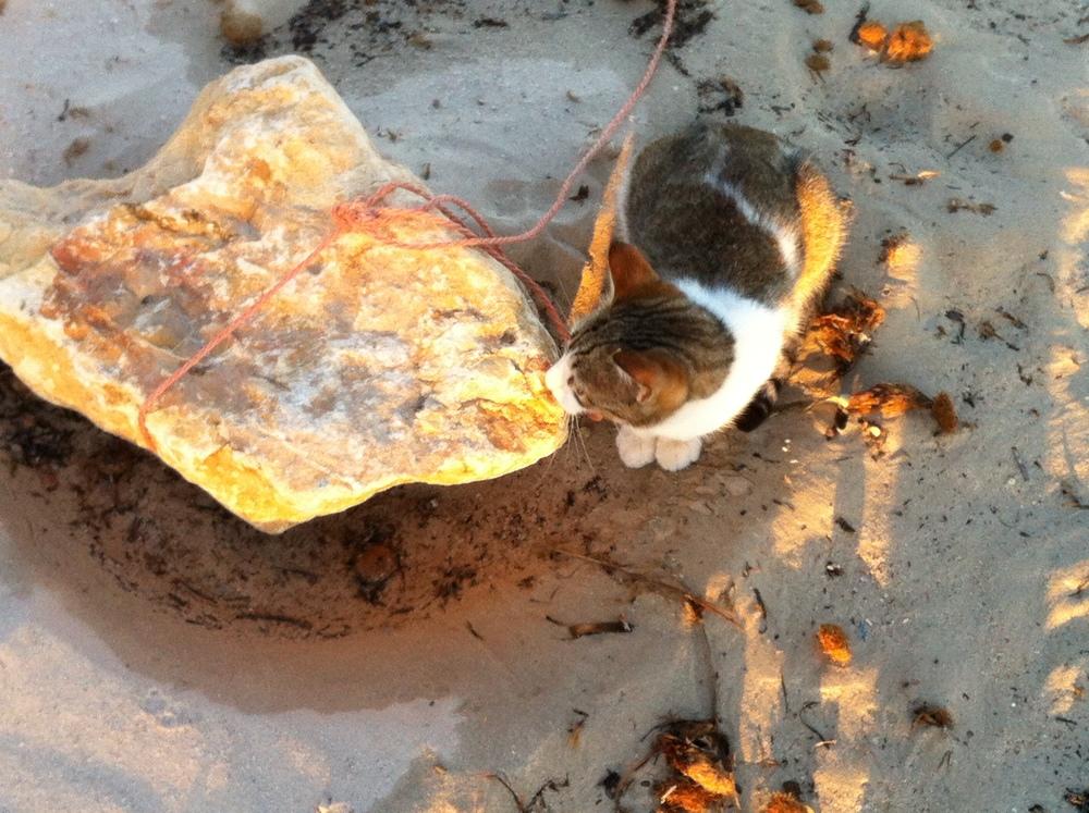kitten at the beach