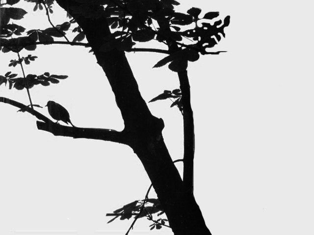 Birdontree black and white.jpg