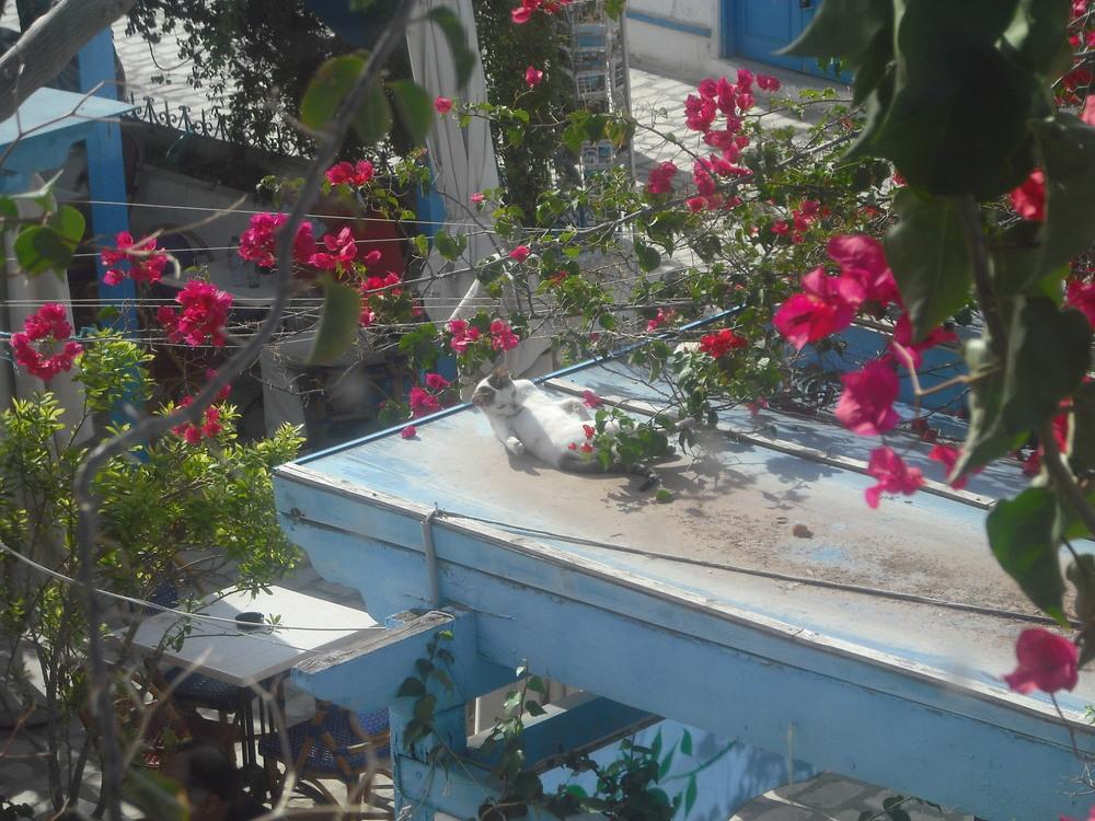 Sunbathing cat (Djerba)