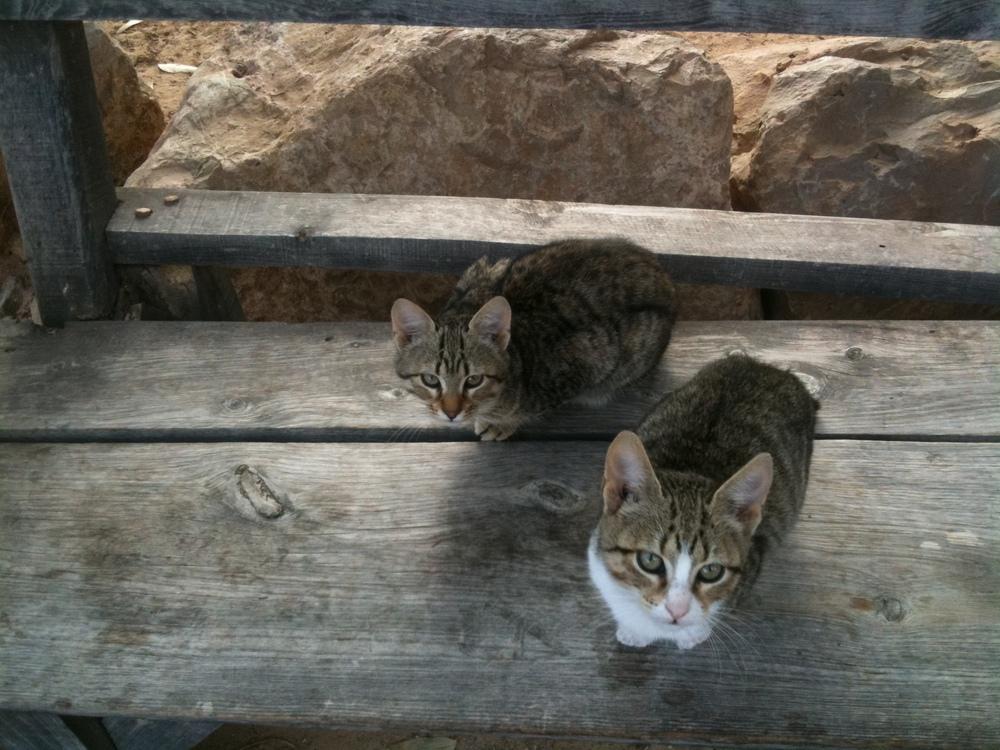 Kittens Djerba