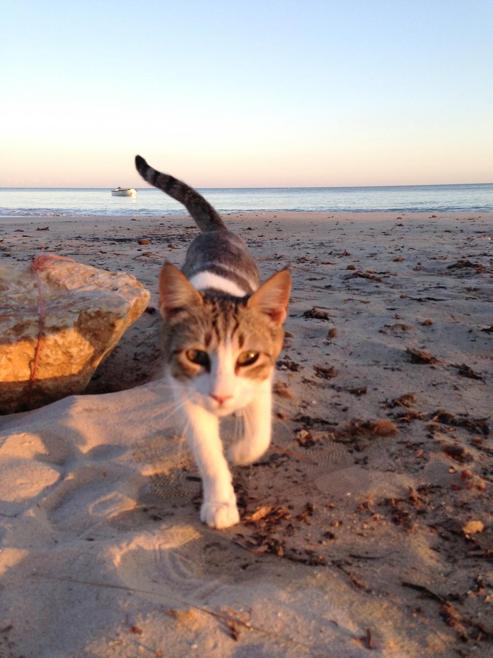Kitten at the beach (Djerba)