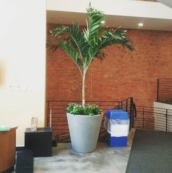 @josegonzalez8631 Palm trees bring joy #makingplaceuws